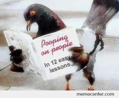 the funny carrier pigeon 2